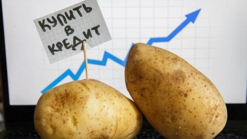 У Дніпрі зміниться ціна на картоплю: скільки вона коштуватиме взимку