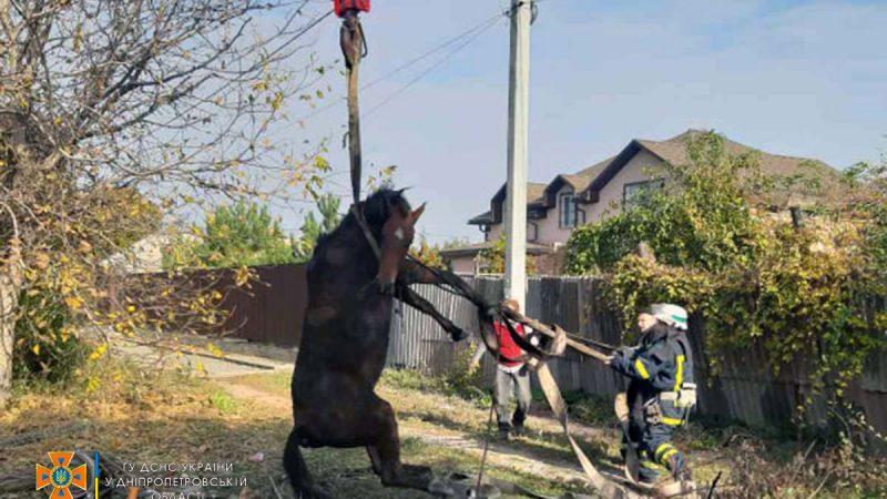Вивільнити коня з пастки: на Дніпропетровщині провели спецоперацію (Фото)