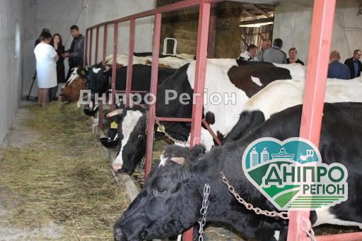 Подія року: на Дніпропетровщині з'являться перші сімейні молочні ферми