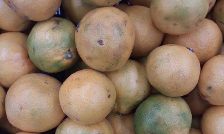 Скільки можна терпіти? У Дніпрі покупчиня показали, які мандарини продають у Варусі (Фото)