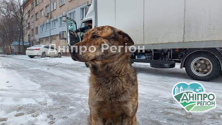 Думки розділились: у Новомосковську хочуть встановити пам'ятник безпритульному псу Гриші