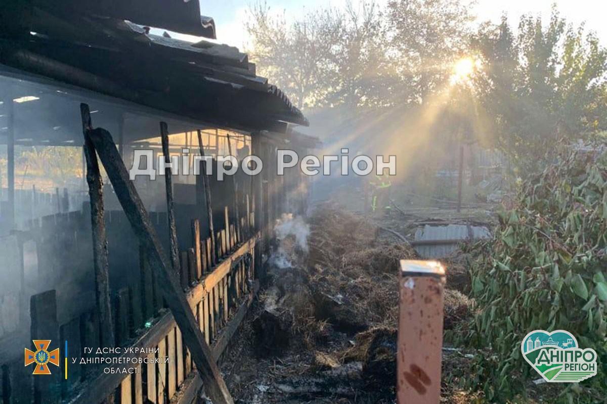 Свині згоріли заживо: під Дніпром господарі втратили худобу (ФОТО)